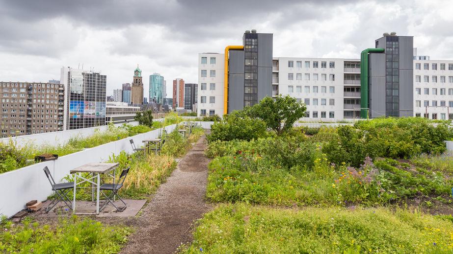 Folyékony gumi vízszigetelés zöld tetők kialakításához!